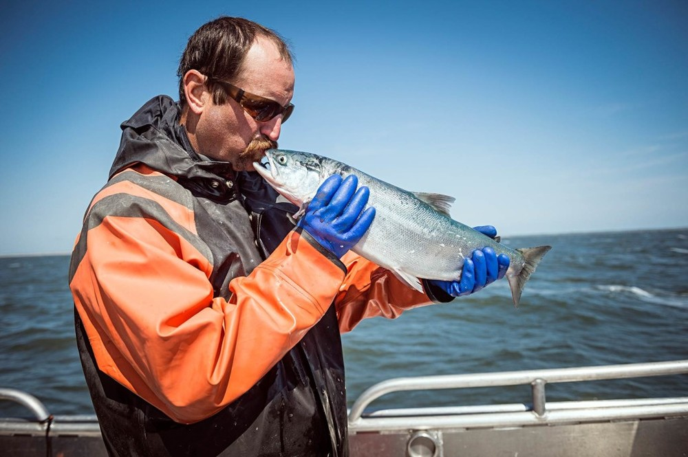On the F/V Icy Bay, Aaron Opp continues the tradition of kissing the first sockeye of the season.