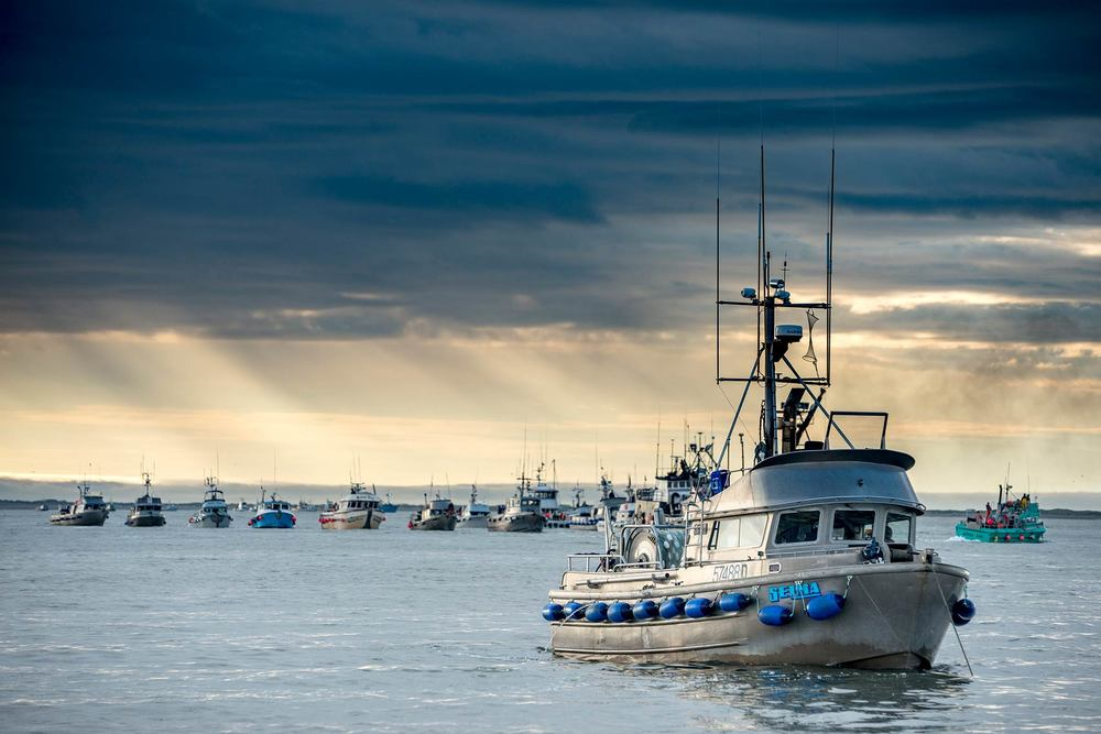 The F/V Selma and the Ugashik fishing fleet wait in line   to deliver to tenders after an opener.