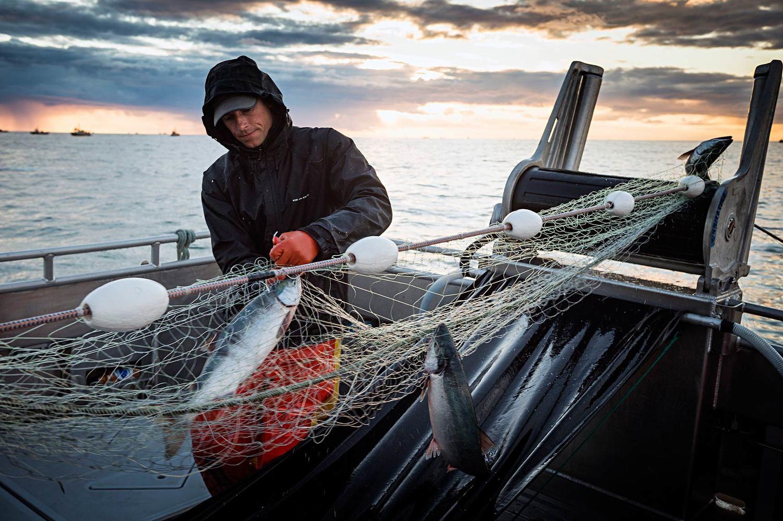 know your fisherman bristol bay sockeye salmon