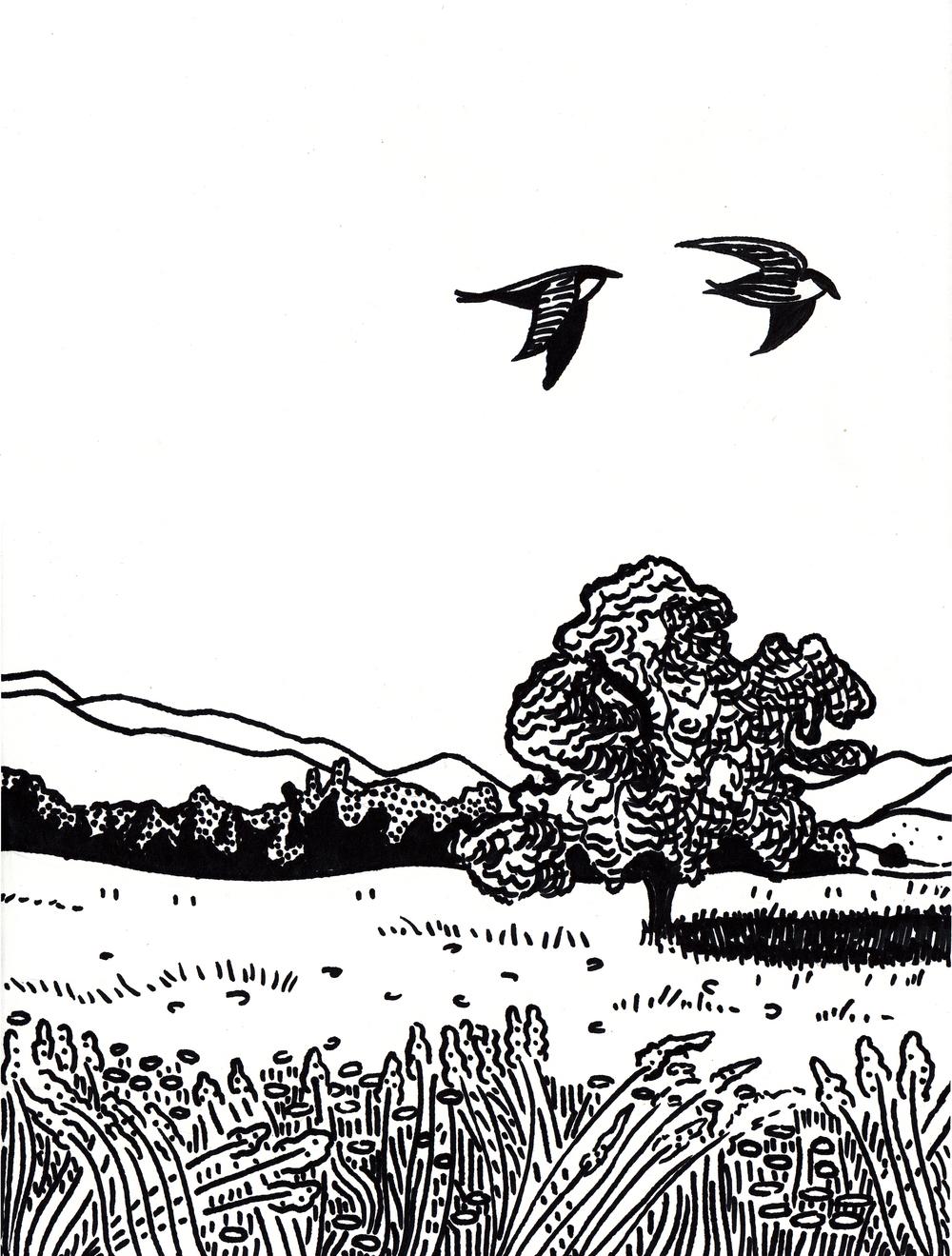 Birds (Card)