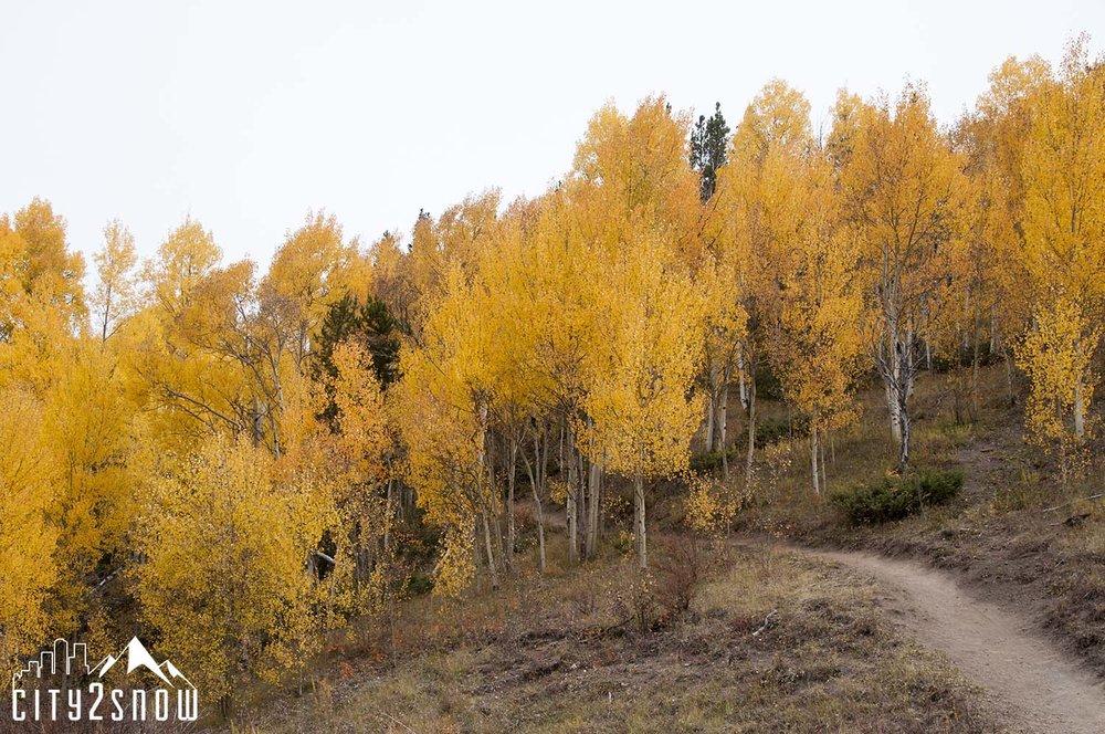 Breck9.jpg