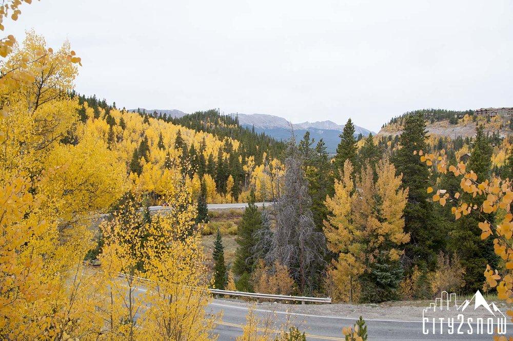Breck11.jpg