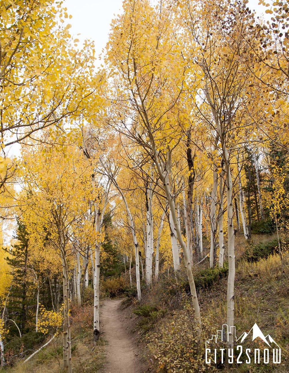 Breck10.jpg