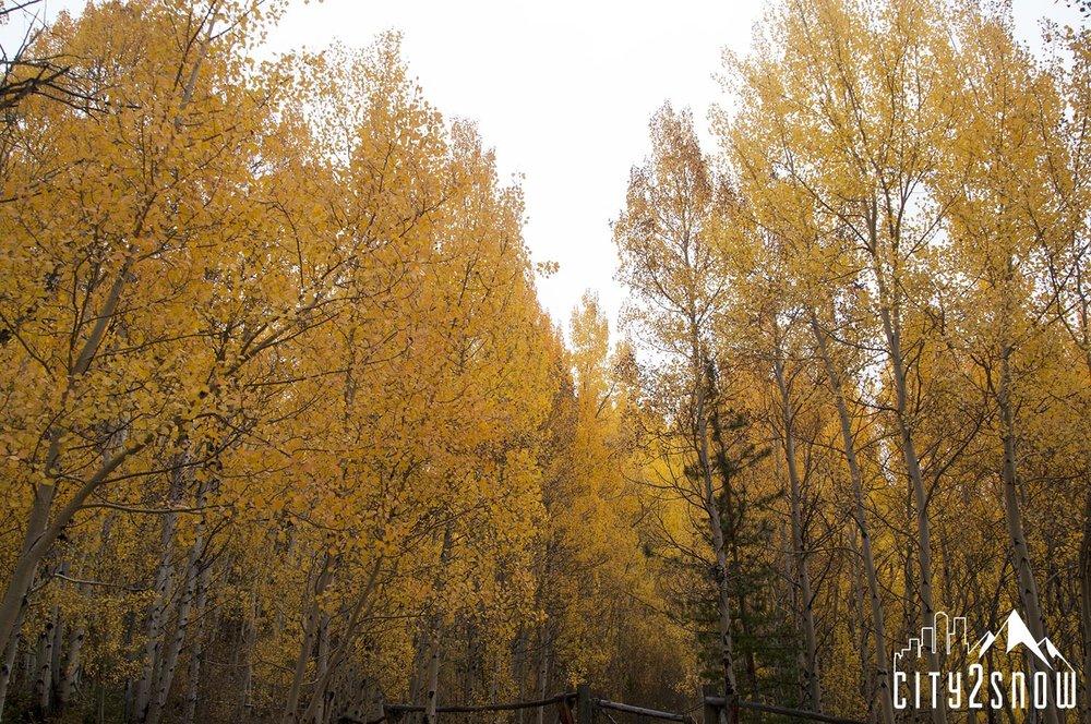 Breck12.jpg