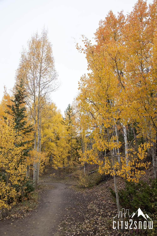 Breck13.jpg