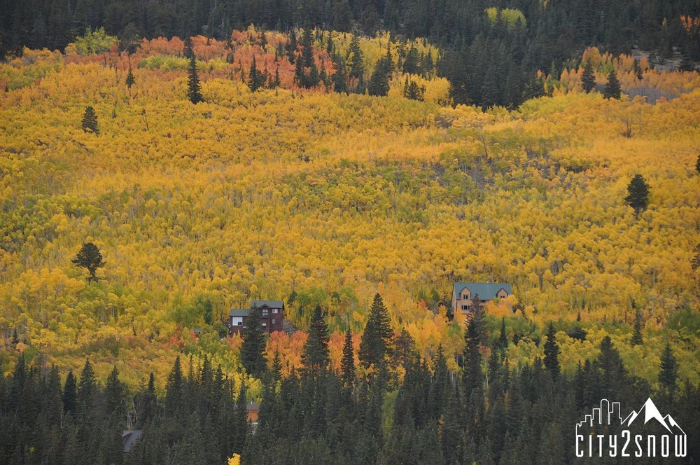 Breck15.jpg