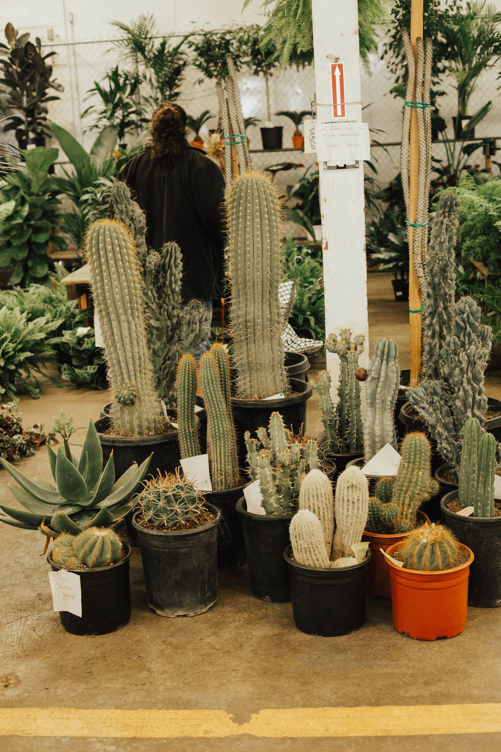 via-thea-sf-flower-mart-cactus