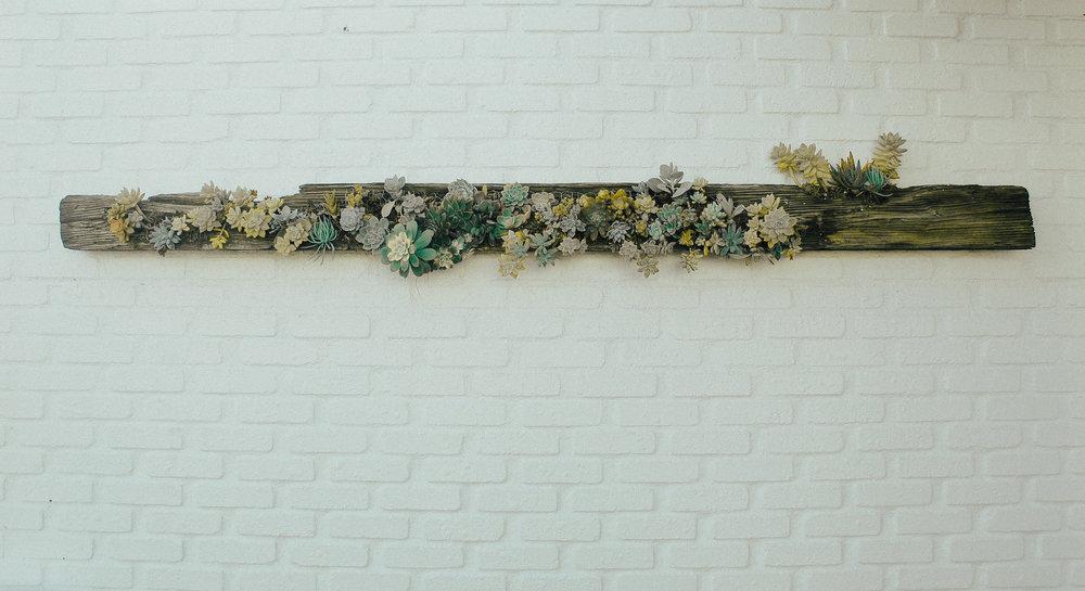 via-thea-succulent