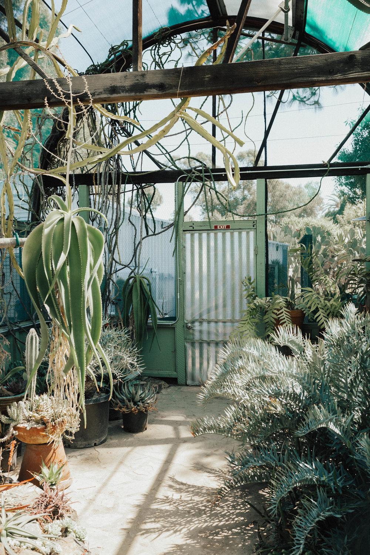 via thea cactus garden greenhouse