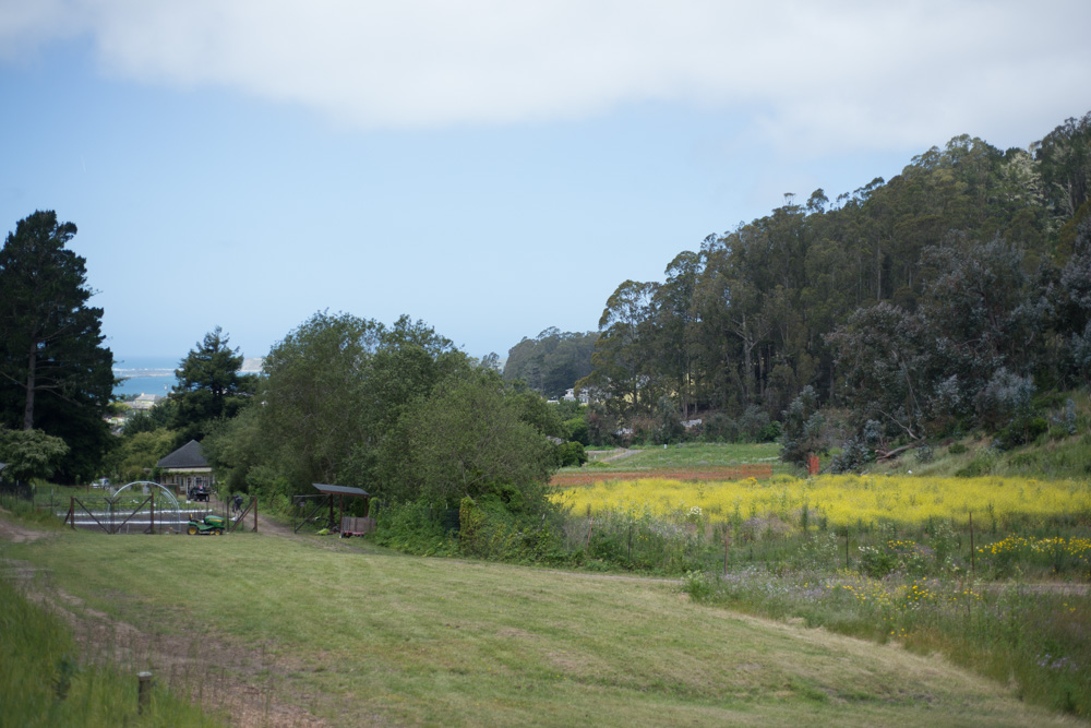 Miramar Farms. The ocean at Half Moon Bay is in the distance.