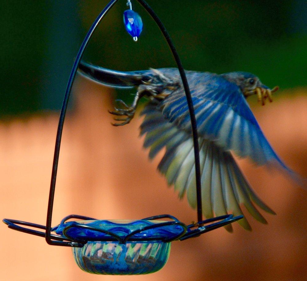 Mary B. Bluebird