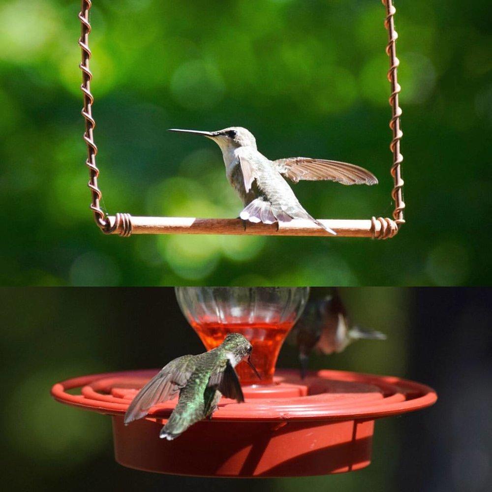 Ruby Throated Hummingbird. photo by Eli H.