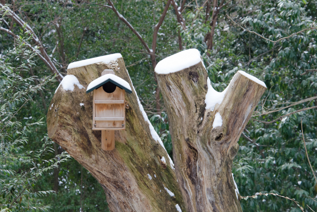 screech-owl-box4.jpg