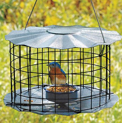 Caged type bluebird feeders help discourage larger birds from accessing mealworms.