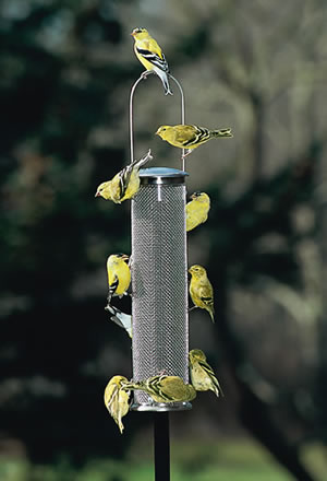Aspects wire mesh nyjer feeders are durable long lasting. Add a weather guard to help keep out the rain.