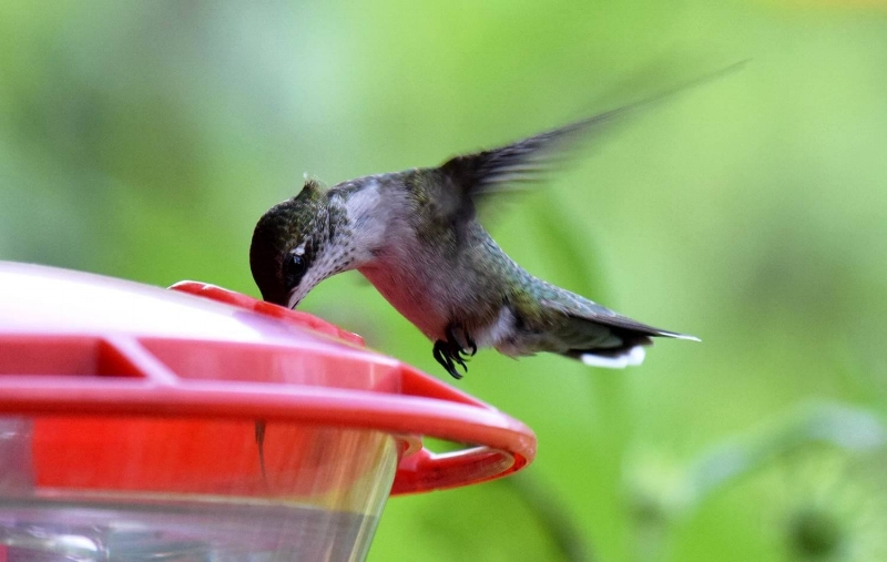 Click here  for more info on the Warner Parks Nature Center's Hummingbird Celebration.