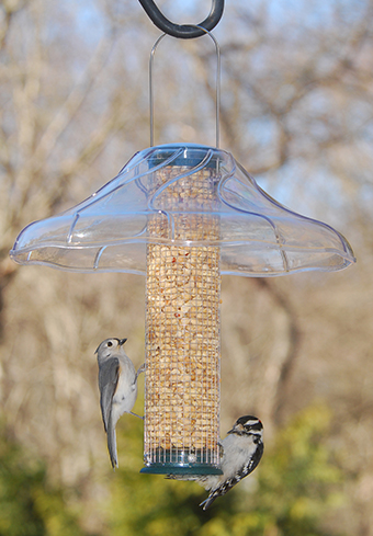 Wire mesh peanut feeder with weather guard.