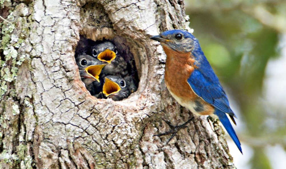 natural bb nest.jpg