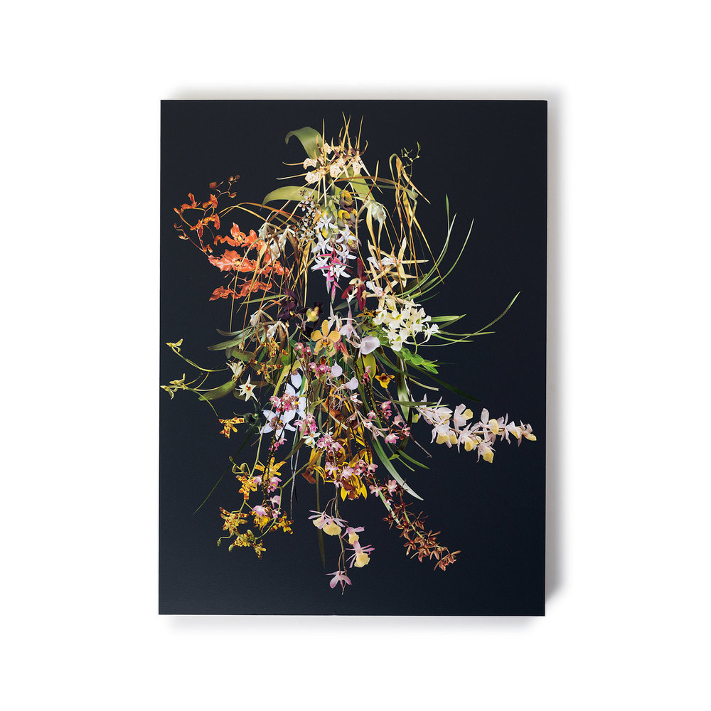 Grass Drape (Orchids) , 2016 Collage on acrylic coated panel 40 x 30 inches