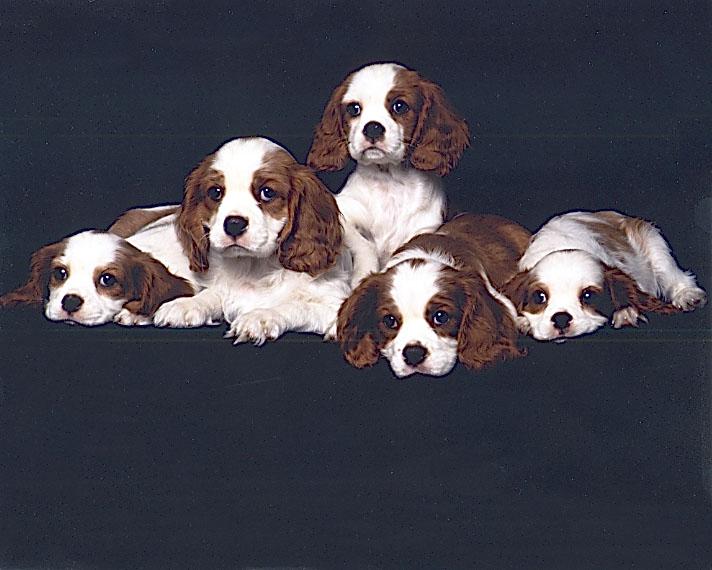 20030526-dogs.jpg
