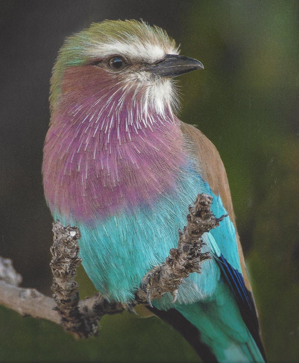 African Bird.jpg