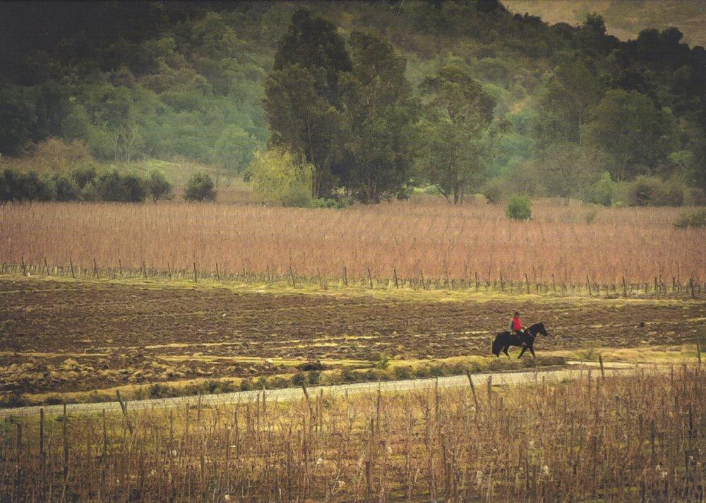 Vineyard Horseback Rider.jpeg