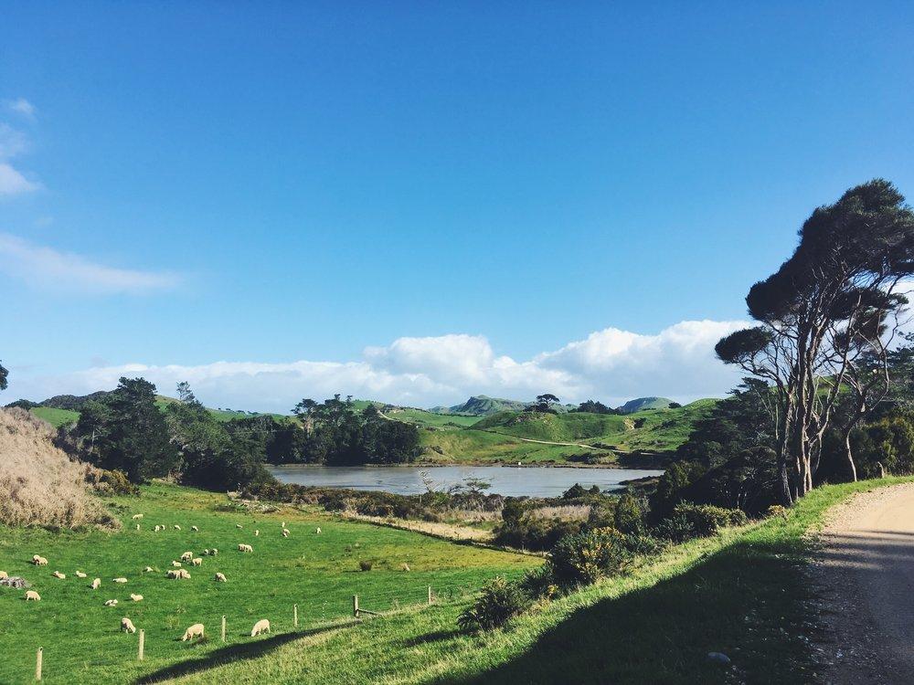 En route to Kaihoka Lakes. That's so New Zealand.