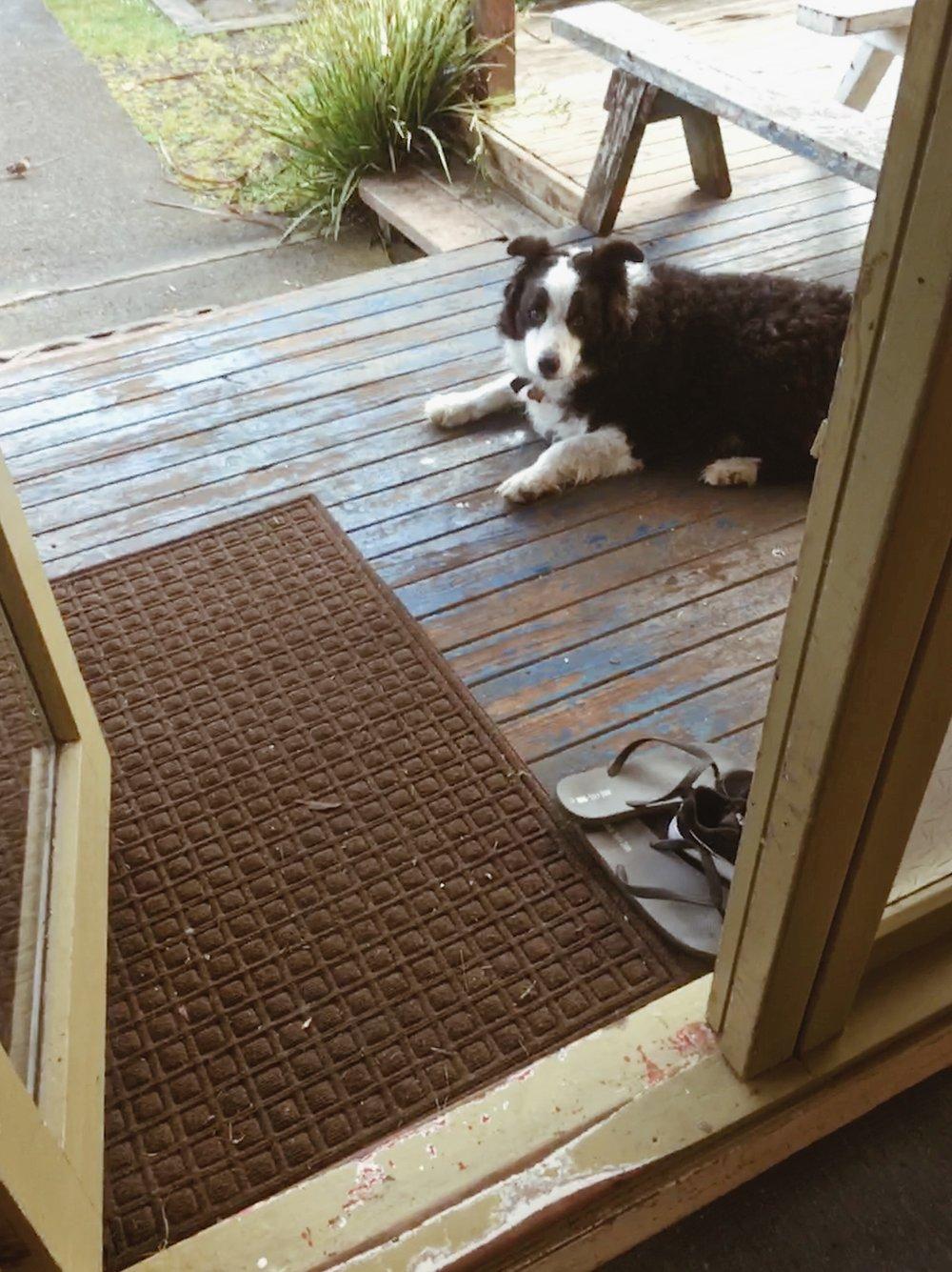 Good news, I met a dog in Raglan.