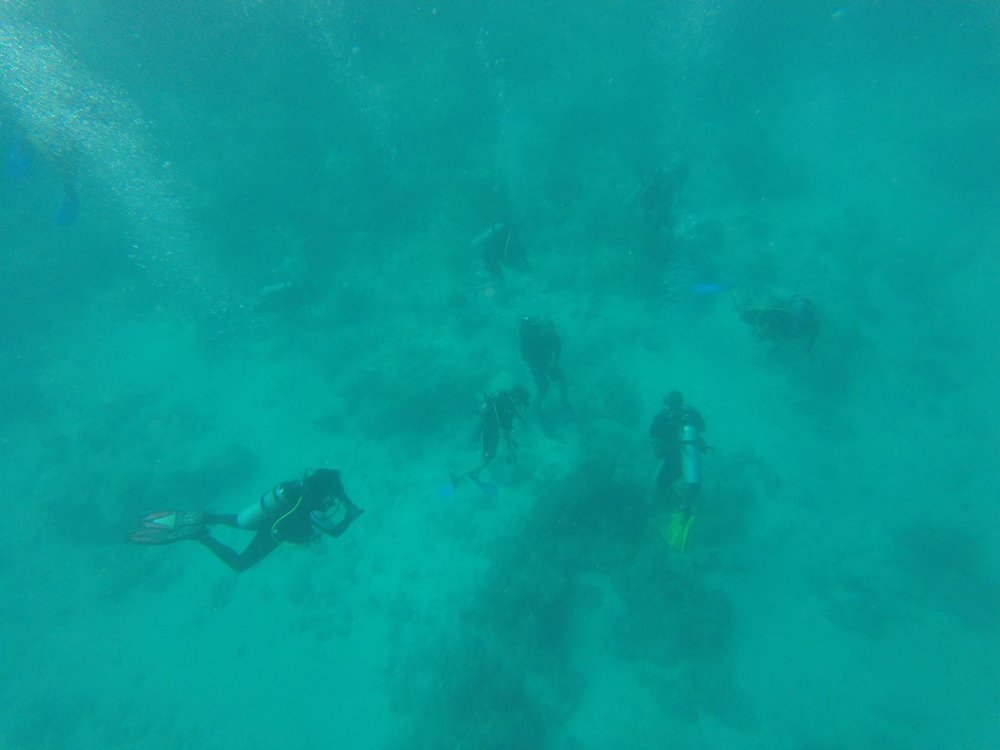 Even though we were snorkeling, we could see the scuba divers below us.