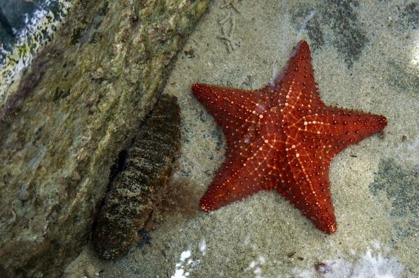 Coral World 1.JPG