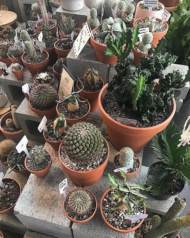 🌵 🌵 . . . #AtlantaGeorgia #ATL #PonceCityMarket #MarketMondays #Monday #Travel #Instatravel #travelBlogger #newdaydifferentcity #Georgia #Cactus #Plants #NatureStuff #VSCO