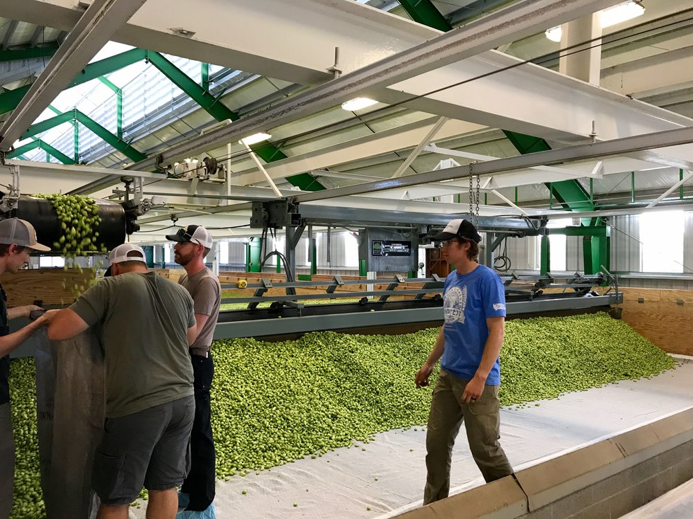 Head brewers Ryan Pappe of Pyramid Brewing gets some help filling a 40 lbs bag of recently kilned hops. Time to load up the hops and head back to Portland.