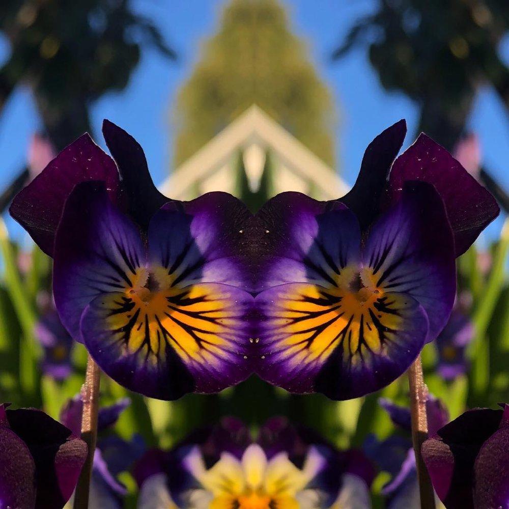 BUTTERFLY FLOWERS BY CALEB BEECHEM