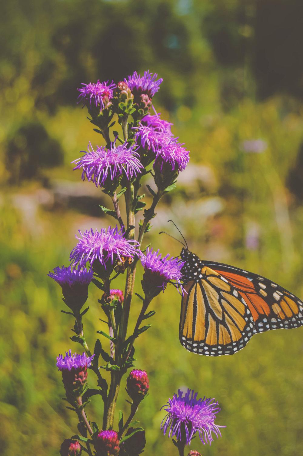Butterfly Macro.jpg