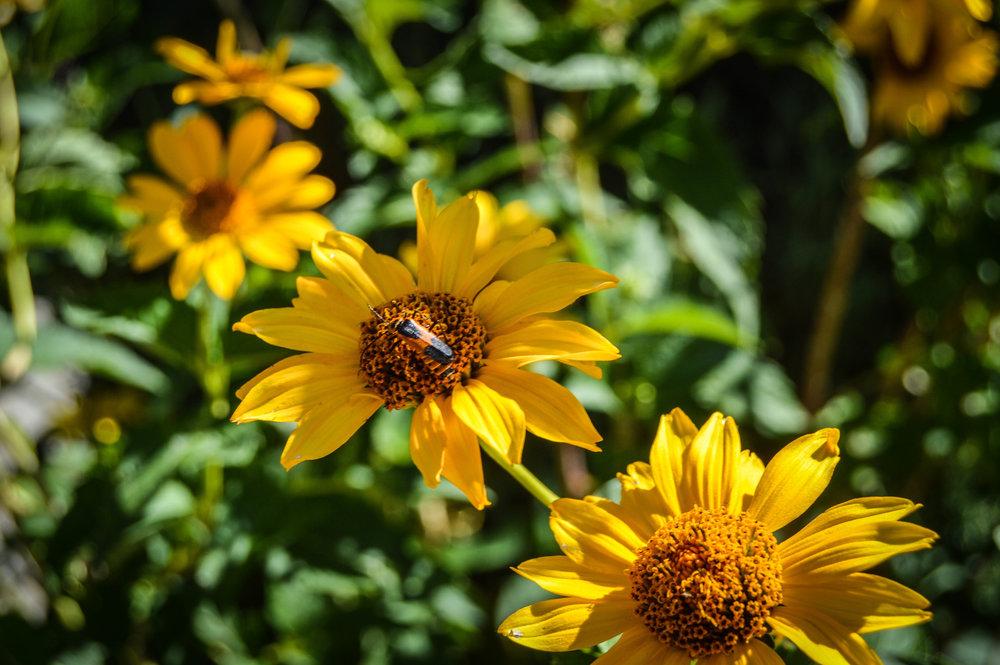 Bug on a flower.jpg