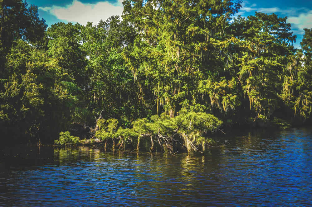 Swamp Beauty.jpg