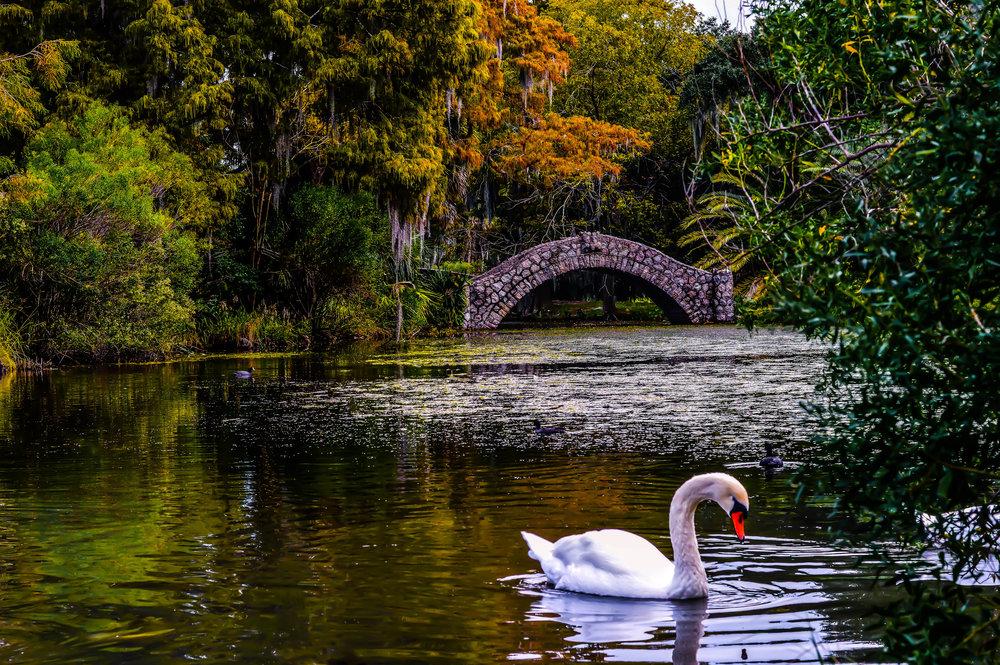 City Park Swan.jpg