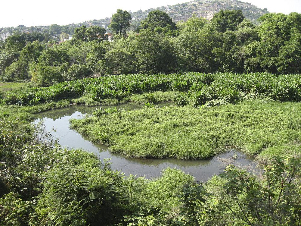 Pantano - Juitepec Centro - Julio 2007@300dpi.jpg