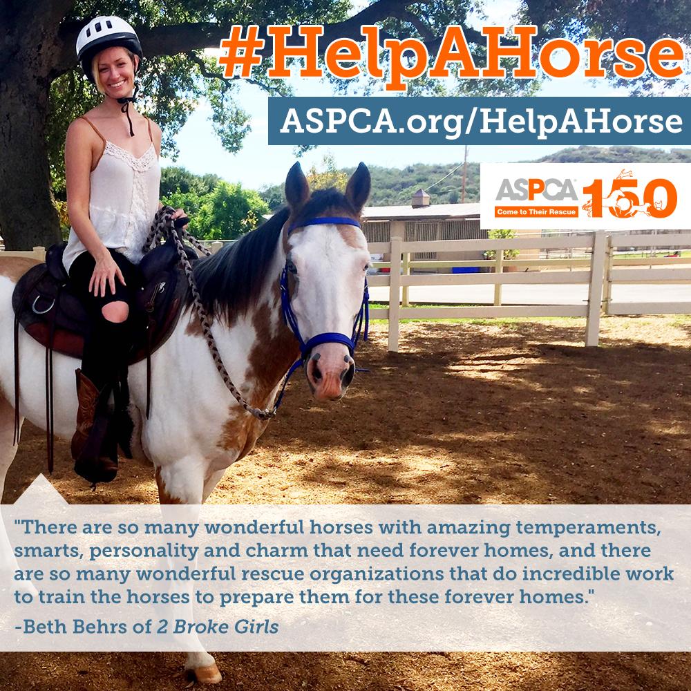aspca-help-a-horse-day-1.jpg
