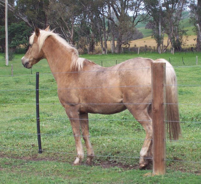 Spotlight Sunday - Christine Meunier's horse Pride