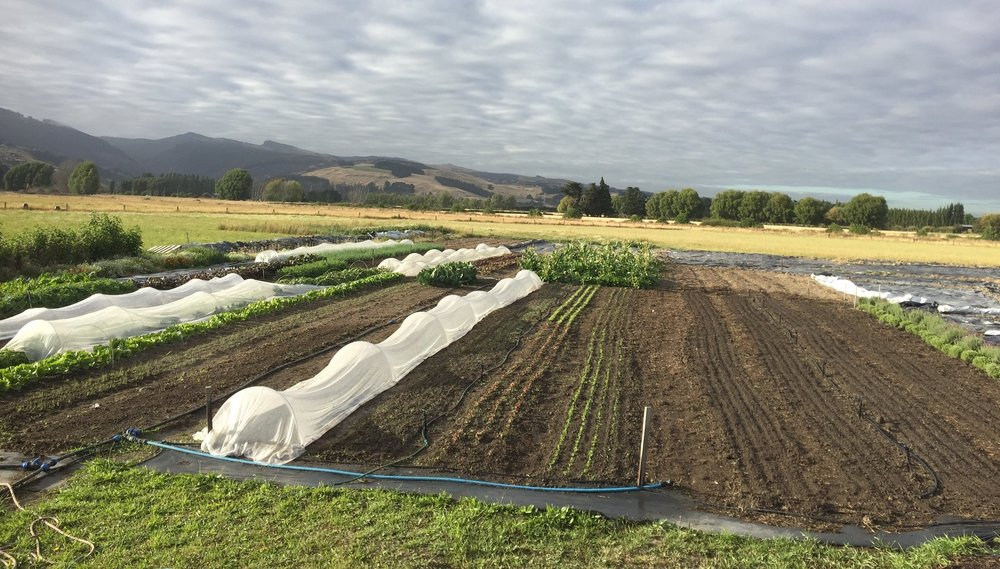 Halswell Commons Urban Farm - 211 Hendersons Road, Hoon Hay, ChristchurchOpen every Wednesday from 8.00am - 4.00pmAll welcome - please contact hello@cultivate.org.nz
