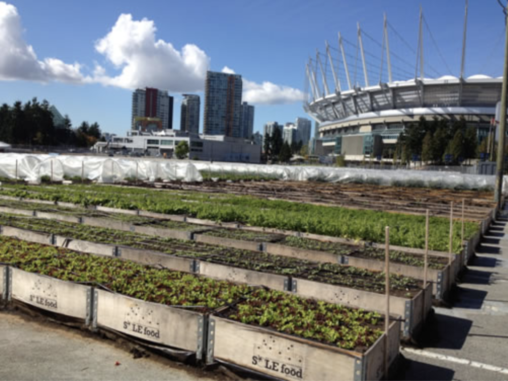 Sole Food Street Farms grows on vacant lots using relocatable planters.