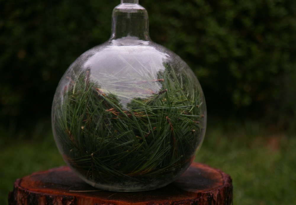 Getting ready to water distill some pine needles in our experimental (5 Litre) distillation vessel.