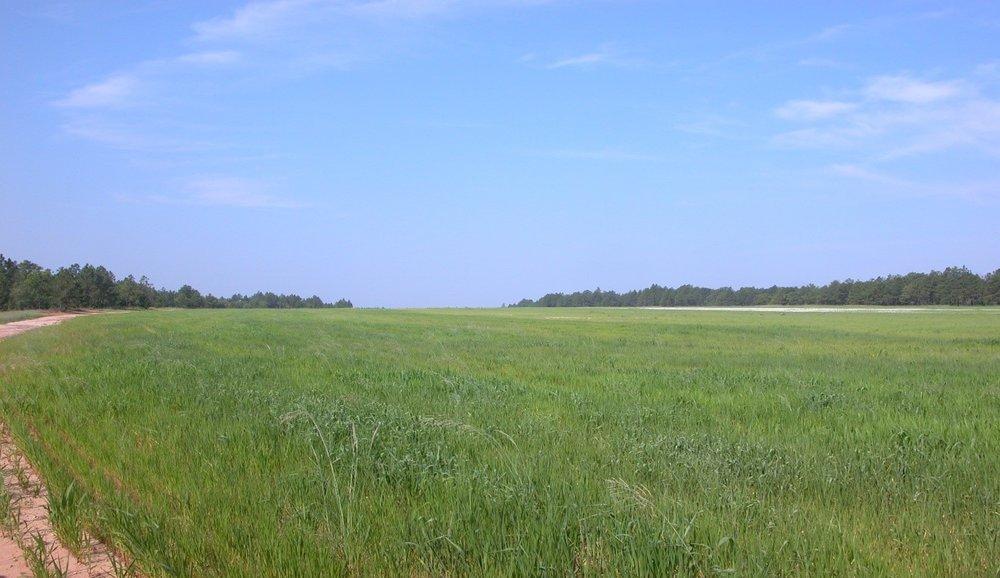 Range Field