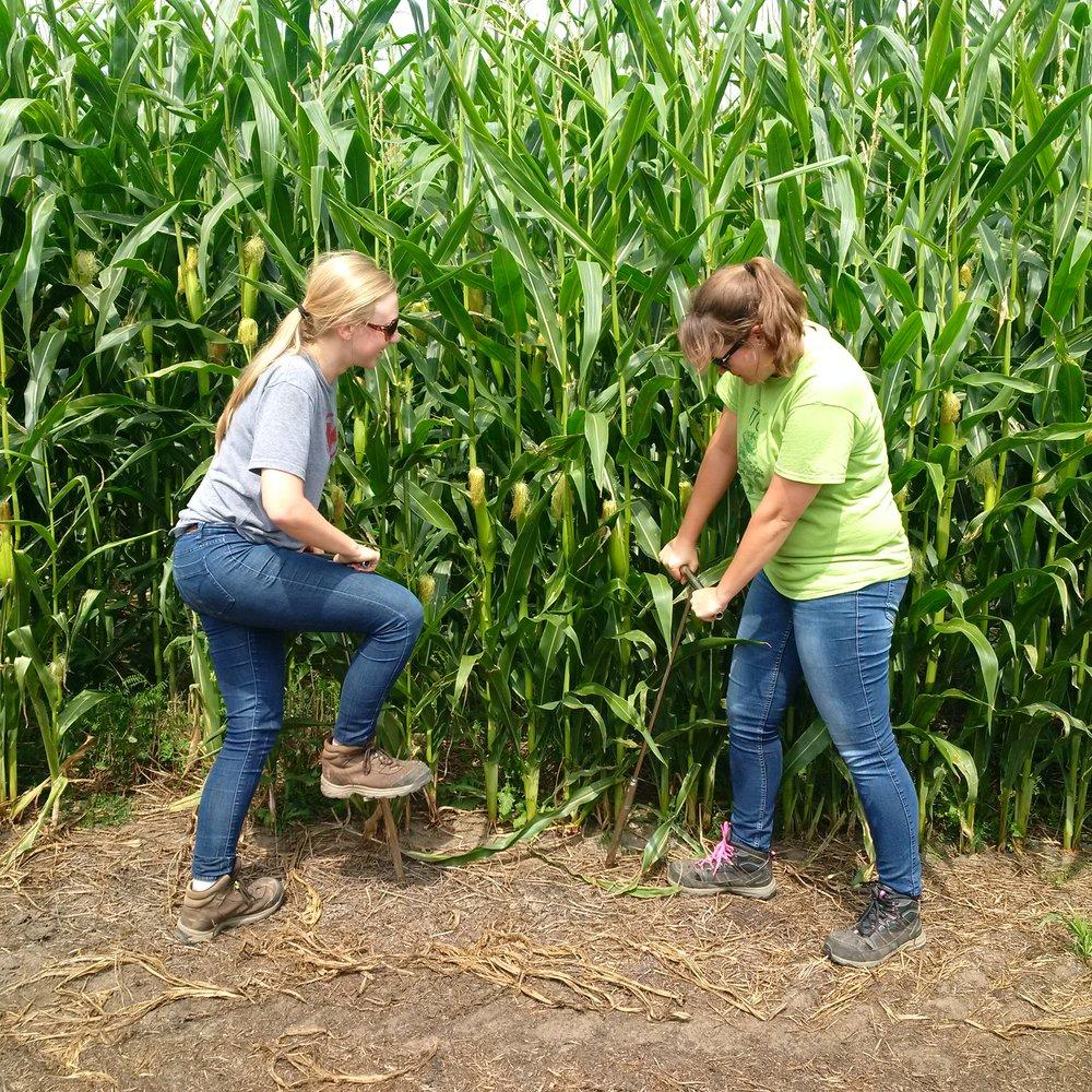 Soil Sampling for our field trials.jpg