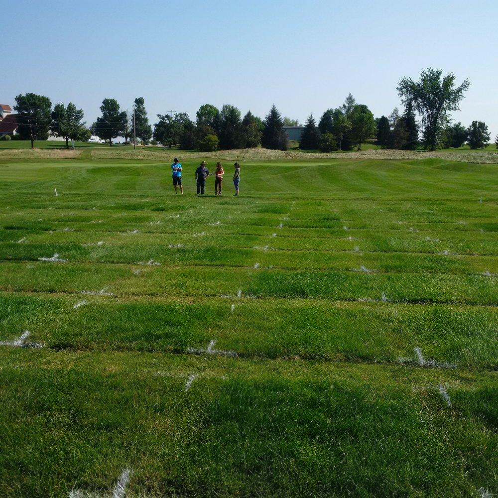 Examining a turfgrass trial