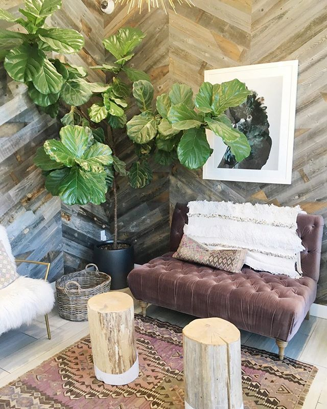 There's so many good things about this picture, the plant, the walls, the chair. Don't be afraid to step out of your comfort zone with design sometimes the results might surprise you. This beautiful space is created by KMI for @lighthouse_salon_suites