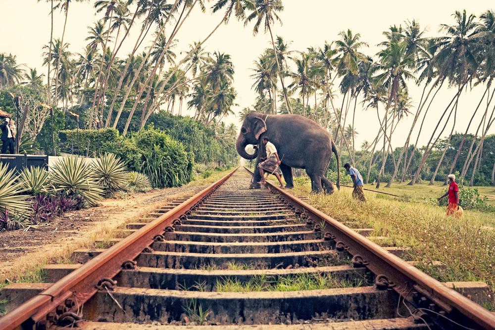 1_Bentota_Sril Lanka copy.jpg