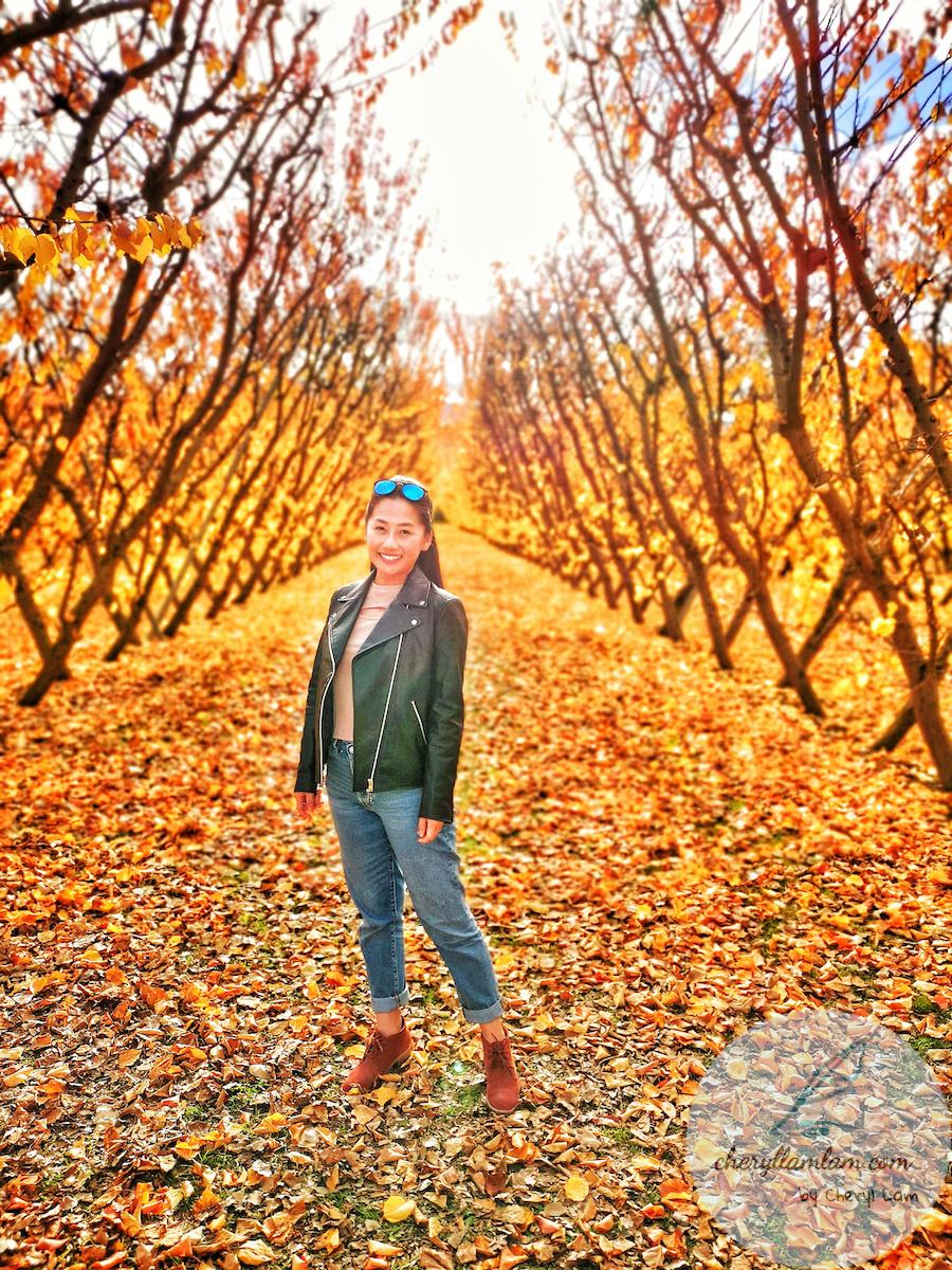 Jacksons Orchard New Zealand