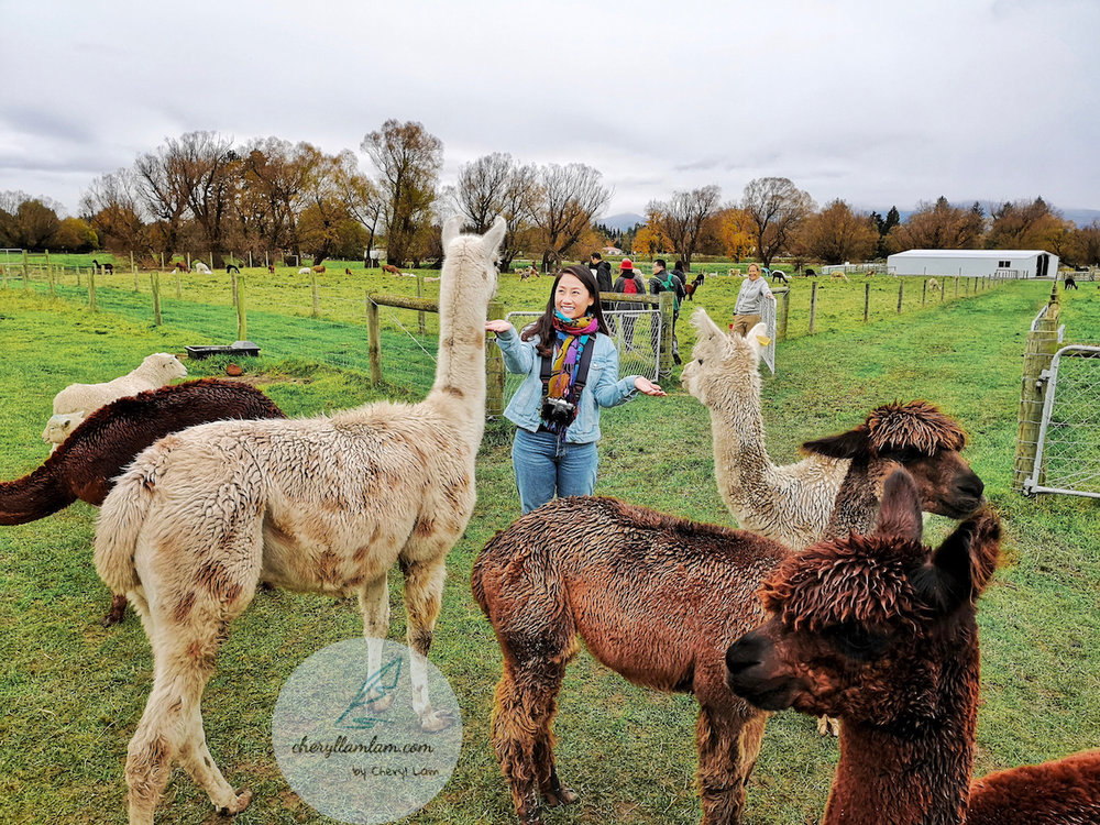 Gem Alpaca Stud New Zealand